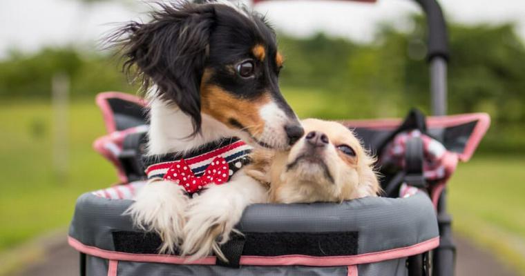 犬のバギーおすすめ7選|小型犬から大型犬、多頭飼いにも!