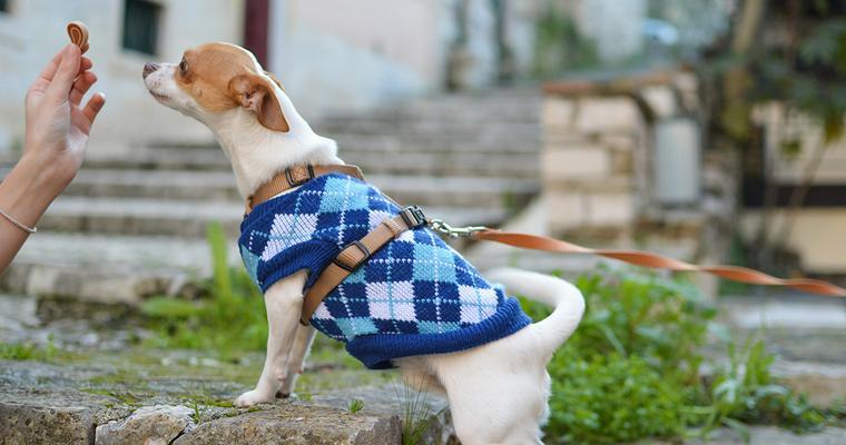 犬のリードおすすめ9選|おしゃれで丈夫な革製のものや伸縮タイプなど
