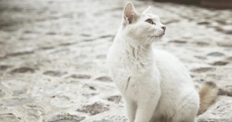 愛猫がマダニに刺されたら? 症状や感染症、予防法について獣医師が解説