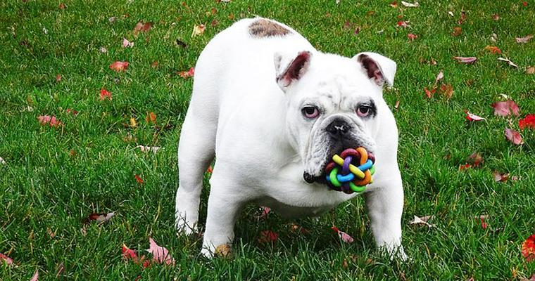 犬のおもちゃオススメ11選 ボールや音が鳴るタイプなど♪