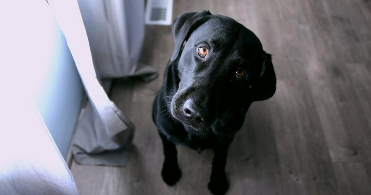 犬のフローリング対策グッズおすすめ11選|ワックスやおしゃれなマットなど