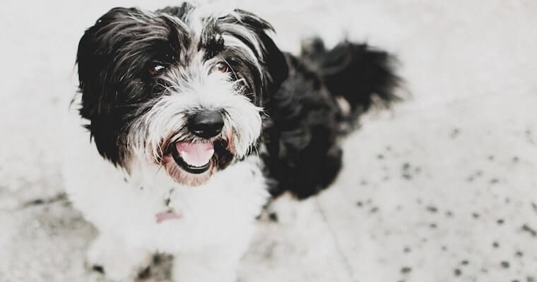 犬のツメダニ症は人間にも感染する? 原因や症状、治療法など獣医師が解説