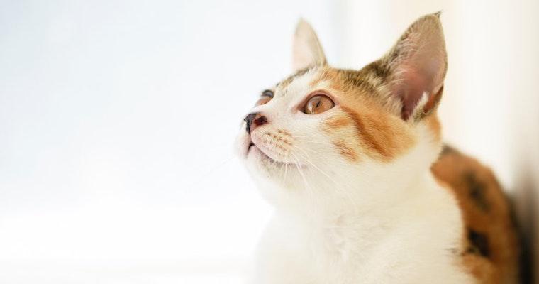 猫の疥癬は人にも感染する? 症状や治療薬、予防法について獣医師が解説