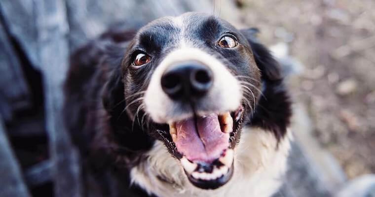 犬の歯石取りとは? 無麻酔のリスクや自宅でのケア方法など獣医師が解説