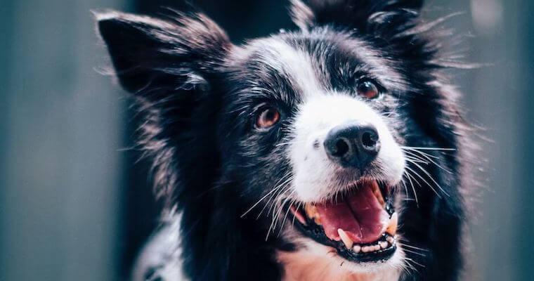 犬の歯が抜けた・ないときに考えられる原因・病気などを歯科担当獣医師が解説
