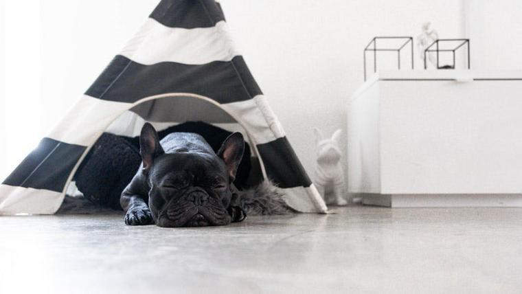 犬用のテントがおしゃれ! おすすめのティピーテントや手作り方法を紹介