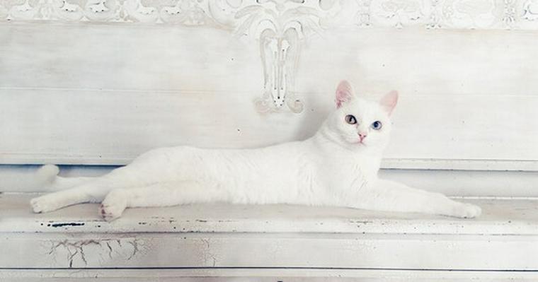 猫が伸びるのはどうして? 長く伸びることができる理由や気持ちを解説