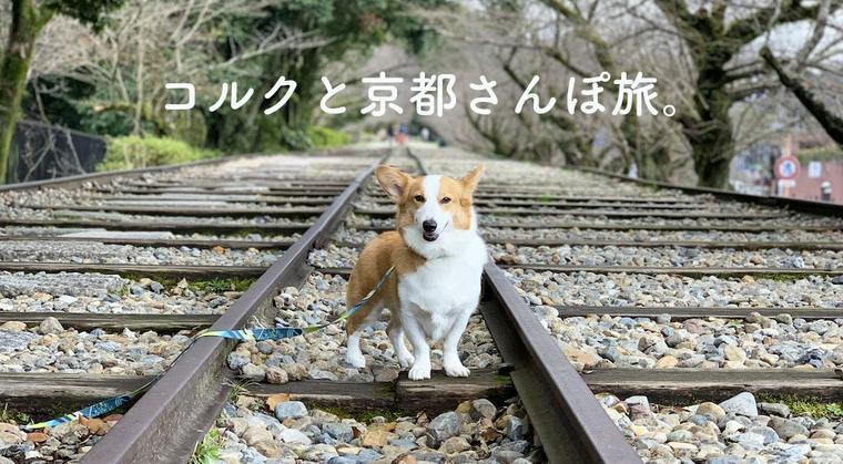 【今日のシロップ】「愛犬コルクと京都にお出かけ」