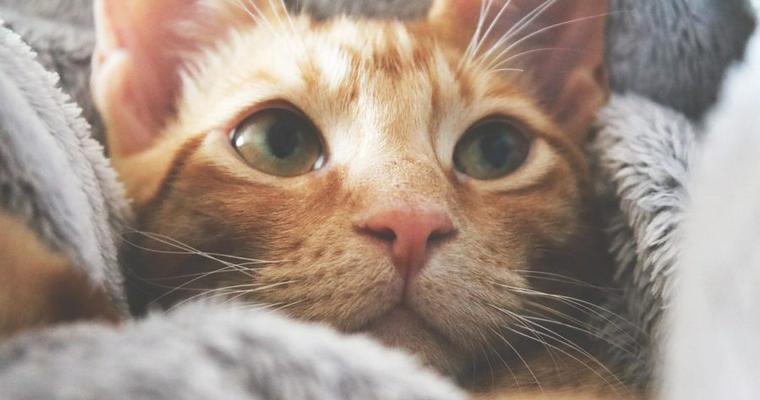 猫もやきもちを焼く? 赤ちゃんや犬に嫉妬する理由や対処法を解説