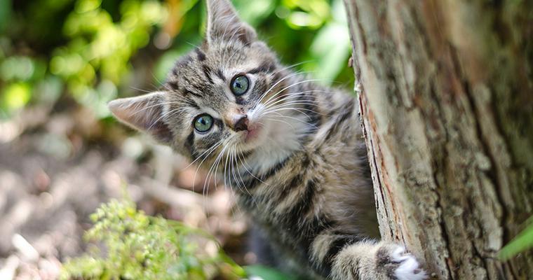 季語として表現される猫たち 春や冬の季語や猫の俳句を詠んだ俳人たちを紹介
