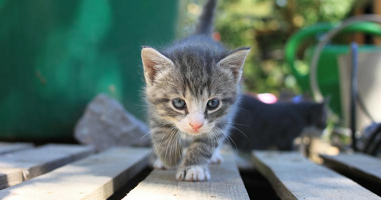 猫の命を脅かす天敵たち カラスなど家の外は危険がいっぱい