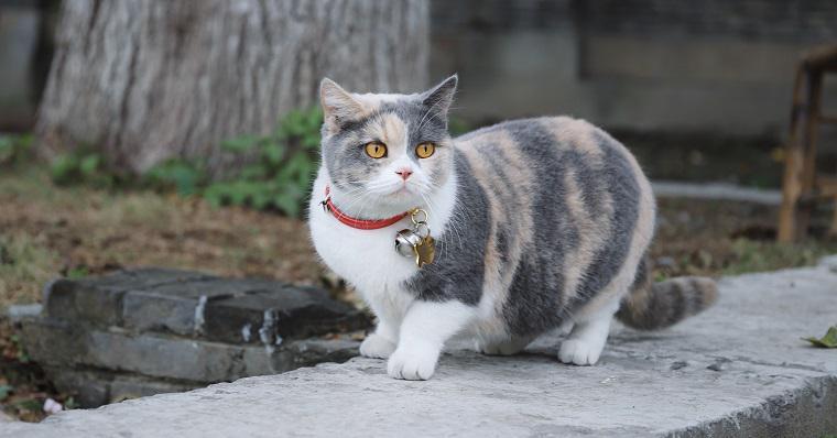 猫が迷子になった! 帰ってくる確率を上げる方法&迷い猫を保護したら