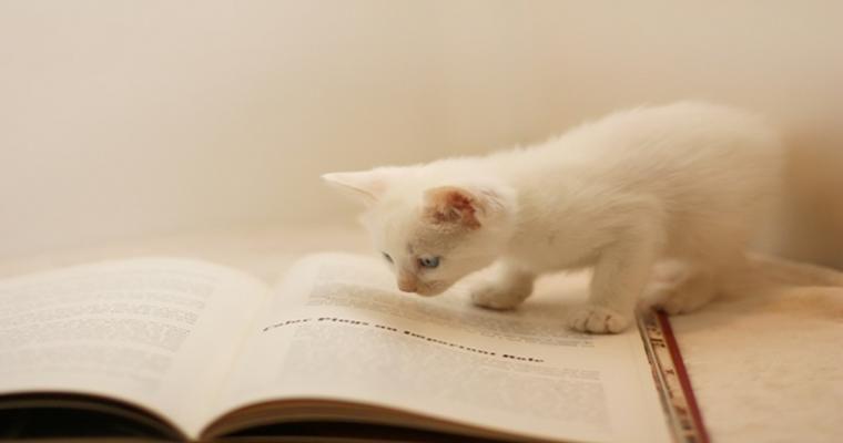 意外と知らない「猫」の読み方 愛猫・成猫・猫種を正しく読めますか?