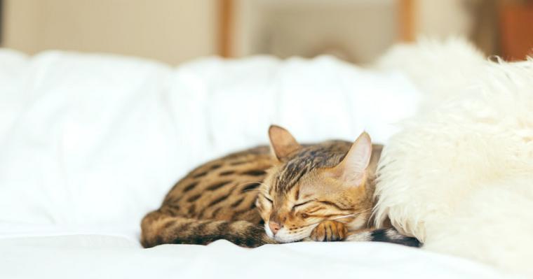 【最新版】猫の寿命はどれくらい? 迎える前に知っておくべき基本事項
