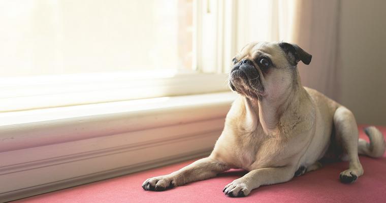 犬用消臭剤おすすめ11選|スプレー・置き型など対策グッズを紹介