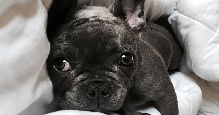 犬がいびきをかくのは病気? 考えられる原因や重症度などを獣医師が解説