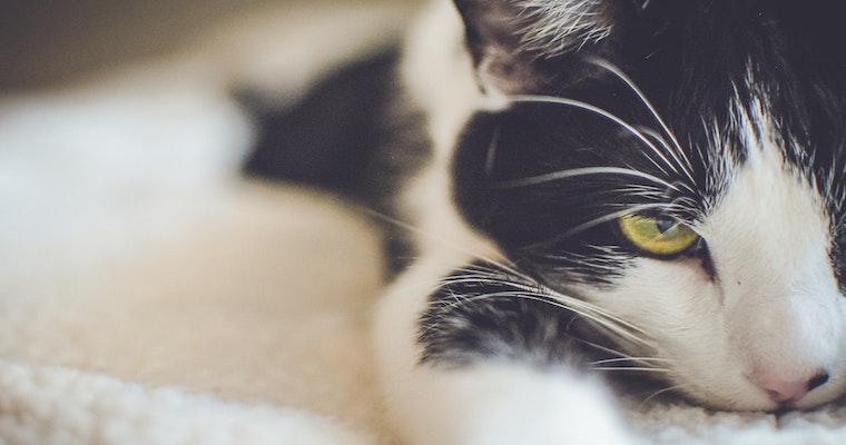本当の病気の可能性も? 猫の仮病を行動診療科獣医師が解説