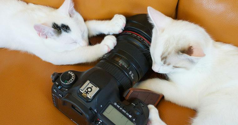 【2019年版】猫の撮影におすすめのカメラ6選|おしゃれなものやペットに特化したものまで