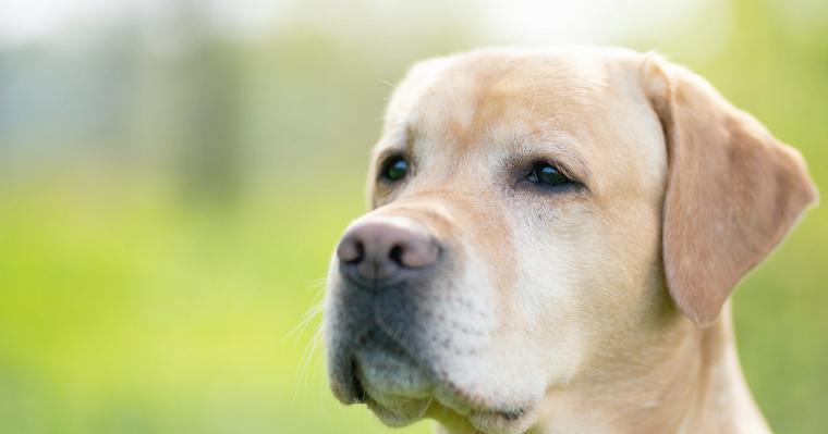 犬の視覚|好きな色や視力など犬が見ている世界を科学的に解説