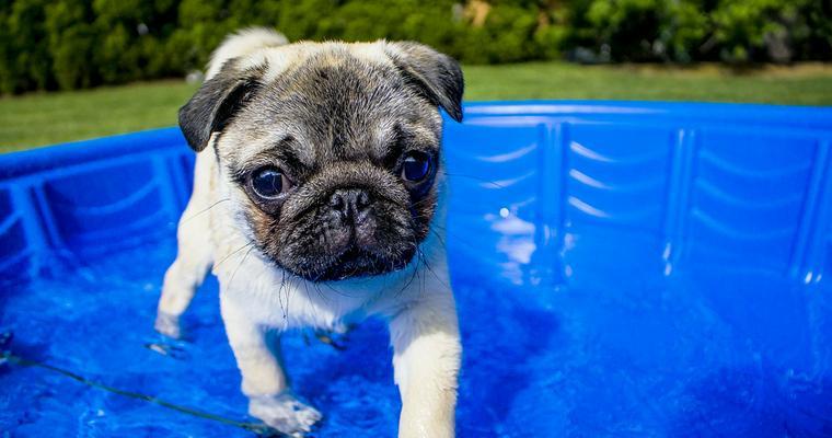 犬の暑さ対策グッズ15選 おしゃれで機能的なおすすめ商品を紹介