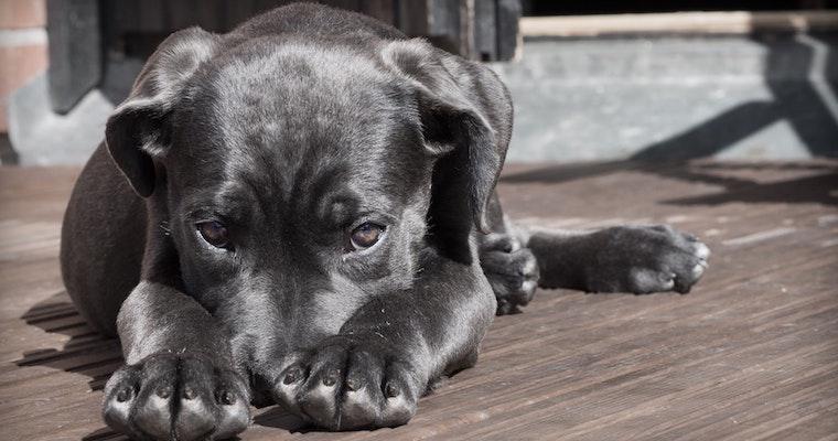 犬が石や砂を食べてしまったら? 原因や対策を獣医師が解説