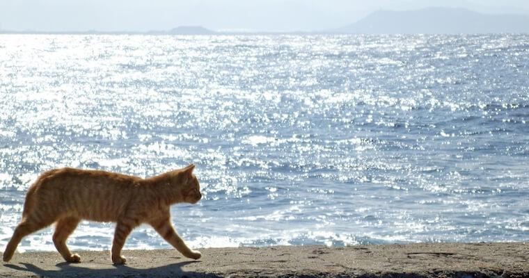 猫も熱中症対策は必要? 獣医師が教える熱中症の症状・予防法・応急処置など