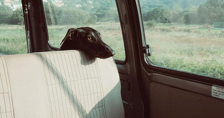 おすすめ犬用シートベルトを紹介! 安全性や装着義務についても解説