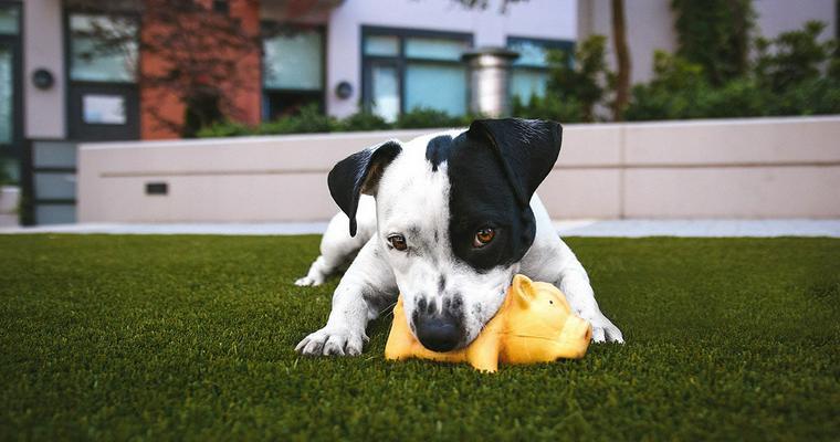 犬の知育玩具おすすめ8選|人気のコングやボール、ニーナオットソン数種を紹介