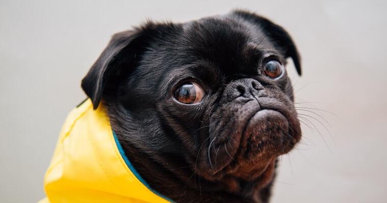 梅雨の犬との散歩はダニに注意! 皮膚や耳の病気や室内でできる遊びを紹介