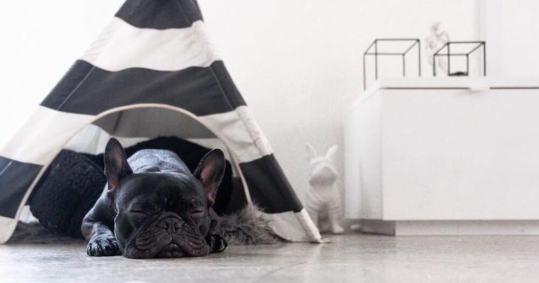 愛犬の暑さ対策はクーラーを活用して快適に。適正温度や注意点を紹介。