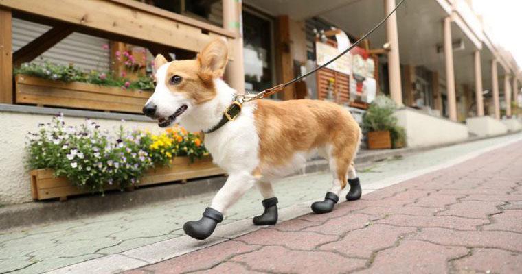 犬用の靴・靴下おすすめ6選|夏場の散歩や災害時など、肉球の保護を忘れずに