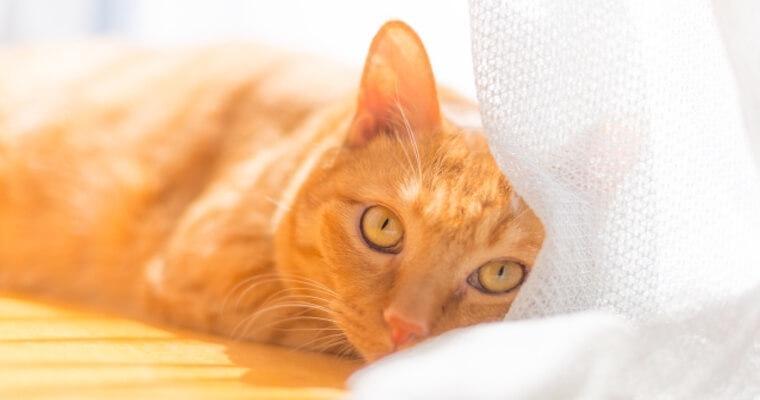 猫はクーラーが苦手? 夏の設定温度や快適グッズを活用しよう!