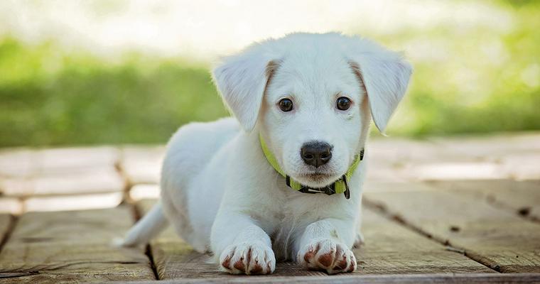 犬のマナーベルトおすすめ7選|使い捨てや、おしゃれな布タイプも♪