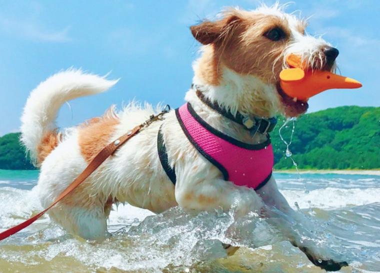 犬連れで海に旅行! 散歩や泳ぐ際の注意点、関東などの海水浴スポットを紹介
