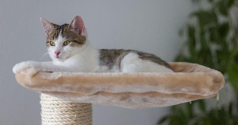 猫のハンモックおすすめ11選|おしゃれな置き型や、椅子の下に取り付けられるタイプなど