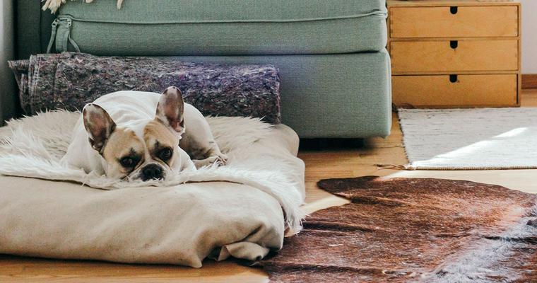 犬のハウスおすすめ10選|ケージやクレート、おしゃれなスツールタイプなどご紹介