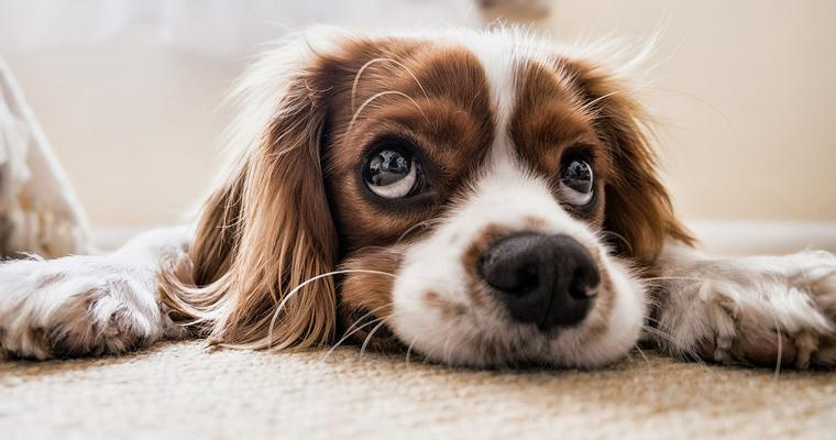 犬のフードストッカーおすすめ11選|真空タイプや大容量タイプ、おしゃれなものなど
