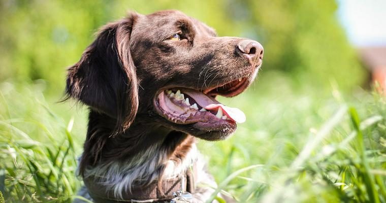 ペトことバイヤーが選ぶ犬用スヌード おしゃれなものや、メッシュタイプなど