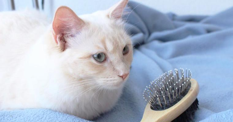 【猫のブラシおすすめ12選】人気のファーミネーター、フーリー、手袋タイプなど