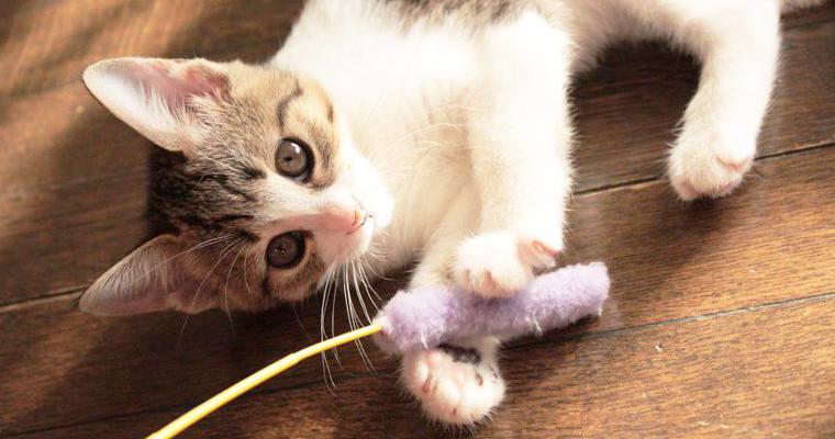 【猫のおもちゃおすすめ19選】おしゃれなトンネル・ボール・ラジコンなどプレゼントにも◎