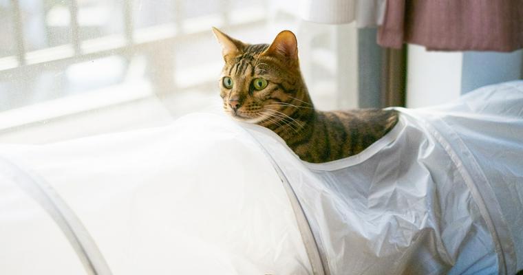 猫が好きなトンネルおすすめ10選 人気のIKEAやダンボール製、おしゃれなフェルト製など