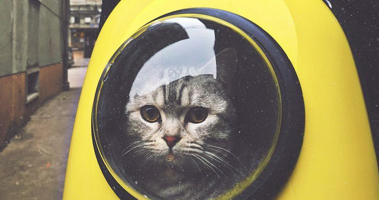 猫のリュックおすすめ8選 人気の宇宙船カプセルや災害時向けのものなど