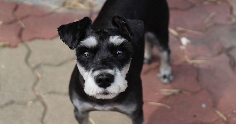 犬の食中毒に要注意! 症状や気をつけたい食べ物について獣医師が解説
