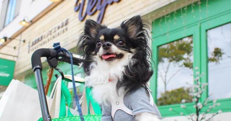 軽井沢の犬連れOKなドッグカフェ・レストランおすすめ15選!