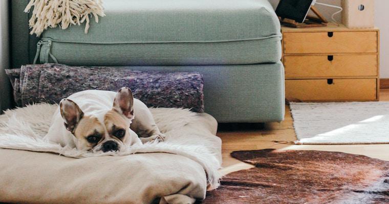 【特集:丁寧な暮らし】インスタグラマーさんに学ぶ、犬猫グッズのおしゃれな収納術