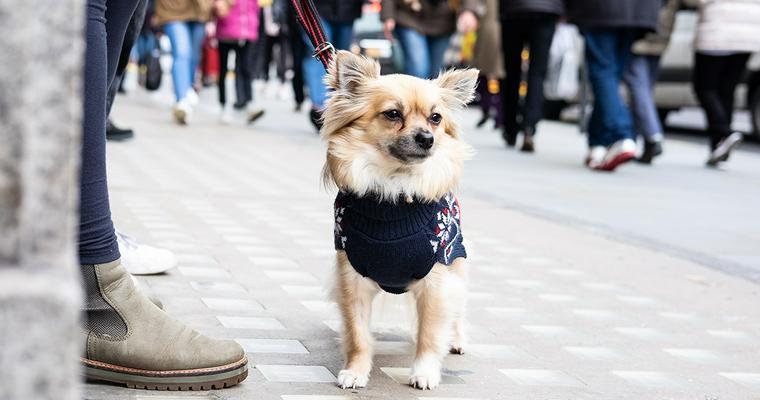 おしゃれな犬服おすすめ9選 つなぎやパーカー、有名ブランド服など