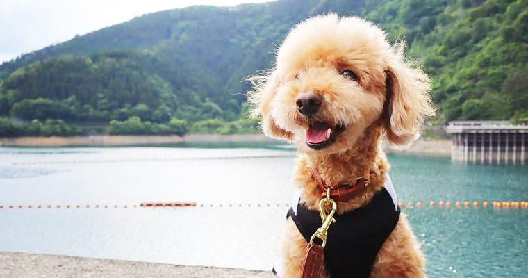 犬とお出かけ多摩編|愛犬との散歩におすすめな公園などご紹介