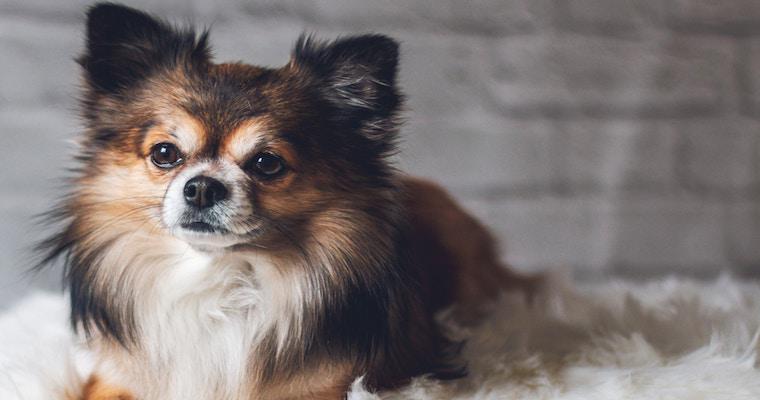 犬の血液検査|検査概要や結果の見方について獣医師が解説