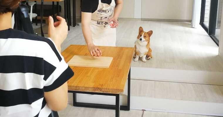 愛犬が喜ぶ手作りごはん動画はどうやって撮影されている? 舞台裏を紹介【今日のシロップ】