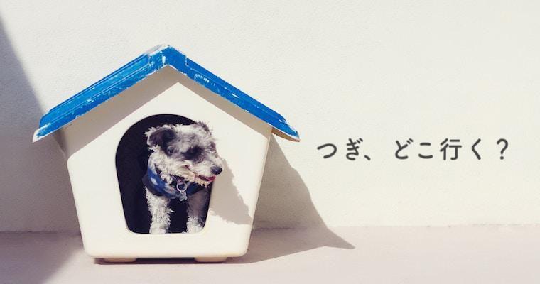 【つぎ、どこ行く?】愛犬と夏を楽しむイベント&宿6選 猫好きさんにも!